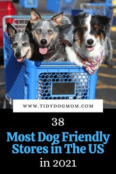 Do you want to go shopping with your dog? Check out these 38 retail, hardware, and home goods stores that are dog friendly and allow you to shop with your pet. Therapy Dog Training, Therapy Dogs, Training Tips, Funny Dog Memes, Funny Dogs, Dog Friendly Stores, Dog Status, Dog Shop, Dog Hacks