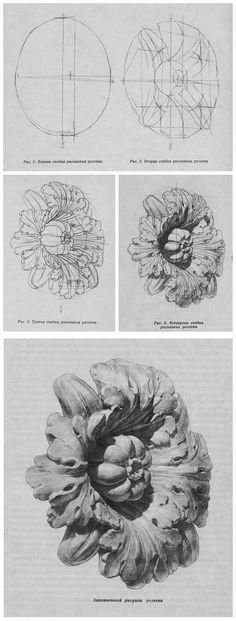 stages of drawing. plaster rosette