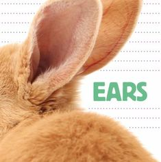 Cover image for Ears.