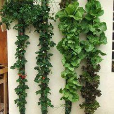 Vertical Vegtables