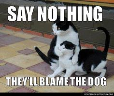 Say Nothing! - Funny Animal Quotes - - 30 Funny animal captions part 13 pics) animal pictures with captions funny memes Animals Memes Memes Memes with The post Say Nothing! appeared first on Gag Dad. Humor Animal, Funny Animal Quotes, Cute Funny Animals, Funny Animal Pictures, Funny Cute, Cute Cats, Crazy Funny, Clean Animal Memes, Funniest Pictures