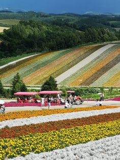 Tour Name: 8 Days Best of Hokkaido – Night Flight Tour Leader: Ronnie Low Departure Date: 19 July 2018