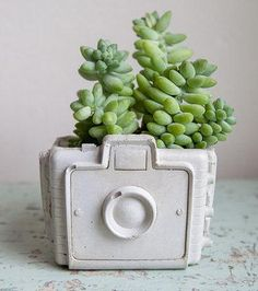 Picture this: a camera-shaped planter for your most photogenic succulents. #etsyfinds