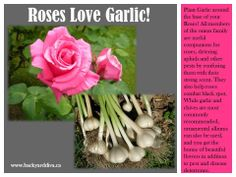 Companion Gardening has many benefits!