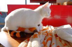 cat ラスカルと3