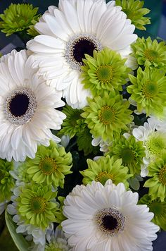 Green and white gerberas