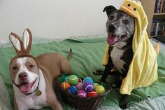 Easter Bullies - We wanted to share these amazing, cute photos of our fans' pit bulls enjoying Easter.
