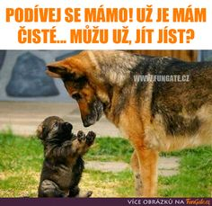 dog training,dog hacks,smart dog,teach your dog,dog learning Funny Animal Quotes, Funny Animal Pictures, Funny Animals, Animal Funnies, Animal Memes, Adorable Animals, Cute Puppies, Cute Dogs, Puppies Tips