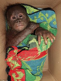 Alan Knight, Chief Executive of International Animal Rescue, said that it's hard to stomac...