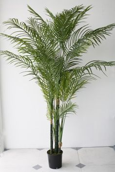 Areca Palm Tree - Various Sizes | Flux Boutique