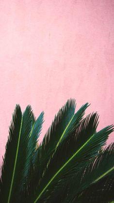 Pin by skyzbelll on plants leaves wallpaper iphone, iphone wallpaper, palm Leaves Wallpaper Iphone, Phone Wallpaper Images, Plant Wallpaper, Tumblr Wallpaper, Aesthetic Iphone Wallpaper, Screen Wallpaper, Aesthetic Wallpapers, Wallpaper Backgrounds, Flower Wallpaper