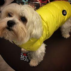 Per questo inverno ho scelto @ilovemydog_official  #treviso #minupetshop #ilovemydog