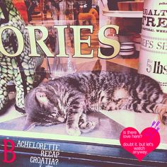 kitty bachelorette post