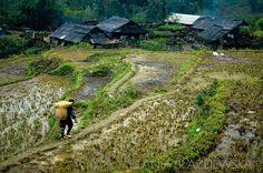 Vietnam, Sapa. Hmong woman coming back home with a big basket on her back.