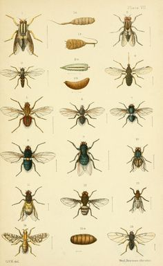n172_w1150   An elementary manual of New Zealand entomology;…   Flickr - Photo Sharing!