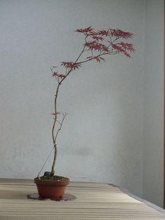 Bonsai Art, Bonsai Plants, Bonsai Garden, Japanese Indoor Plants, Botanical Interior, Zen Garden Design, Plant Art, Ikebana, Flower Art