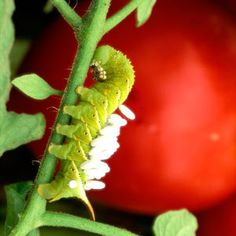 Deter Garden Pests and Diseases Naturally: Keep pests, diseases, and critters out of your garden with homemade sprays you can whip up in less than five minutes. | From Organic Gardening