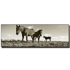 The Horses by Preston Photographic Print on Wrapped Canvas