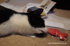 Oliver & Nubai: Arrival of the Freak MEOWt catnip toys Hi everyone, It's Nubia here. 😀 The other week we received this pawesome parcel in the post! Nubia: I was so eager to get in that I didn't even let the humans take a photo before clawing my way in. 😀 And it smelled so good… Nubia: LOOK! It's an upside down cat! See I'm […] #Cat, #Cats, #Cute, #FreakMEOWt, #Funny, #Katze, #Katzen, #Kawaii, #ねこ, #猫 #Nubia, #Oliver,