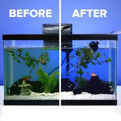 Fish Tank Cleaning Made EasyYou can find Freshwater aquarium and more on our website.Fish Tank Cleaning Made Easy Betta Aquarium, Freshwater Aquarium Fish, Turtle Aquarium, Tropical Freshwater Fish, Tropical Fish Tanks, Aquatic Turtle Tank, Best Aquarium Fish, Turtle Tanks, Aquarium Sump