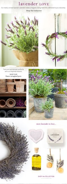 #Lavender love.