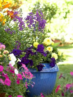 Play Off Containers - Color-play doesn't have to be limited to flowers. Add interest in your yard with statement-making containers. A bold blue ceramic pot, for example, can make just as much impact as the blooms it holds.