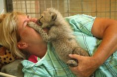 Cheetahs are ruthless predators, even this baby cheetah has learned to maul defenseless, underpaid zookeepers.