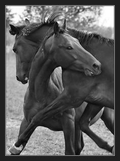 Auch!!! horses, heste, cute, nuttet, animal, adorable, friendship, hugg, stunning, beautiful, photo b/w.