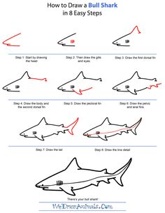 http://www.wedrawanimals.com/wp-content/uploads/2013/07/how-to-draw-a-bull-shark-step-by-step.png