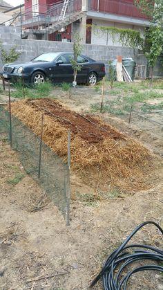 Impianto irrigazione a goccia e pacciamatura