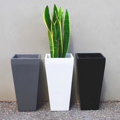 The Windsor Tall Square Planter is a perfect Indoor & Outdoor Planter for your Home, Garden & Patio. Sizes range Small to Large, great for Container Gardening