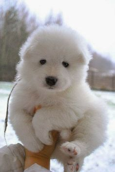 So fluffy and adorable :)