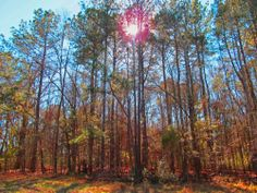 Winter sun through the trees - Alabama - photo by Mary Prater