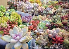 まるでオブジェのような愛らしい姿に癒される多肉植物。花が咲くような美しい形のもの、縦に伸びるもの、根を這うもの、不思議な形が多いのも魅力です。 Outdoor Living, Succulents, Woman Cave, Landscape, Plants, Outdoor Life, Scenery, Succulent Plants, The Great Outdoors