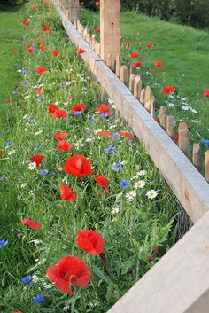 beautiful wildflowers along fence line