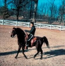 Image result for elvis horse riding