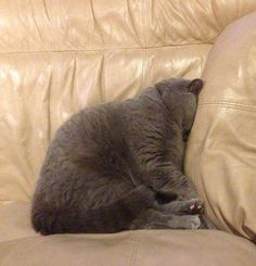 Funny cat sleeping positions