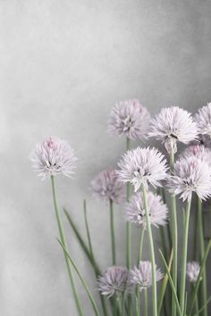 Lavender Flowers and Green Chives on Soft Gray  by BrookeRyanPhoto, $10.00