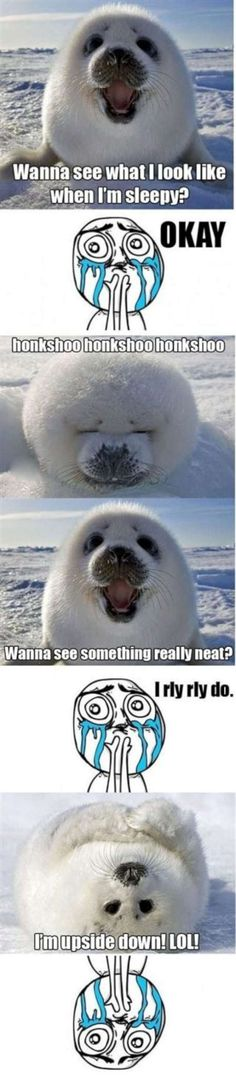 cute animal memes | cute seal meme-W630Vitamin-Ha | Vitamin-Ha
