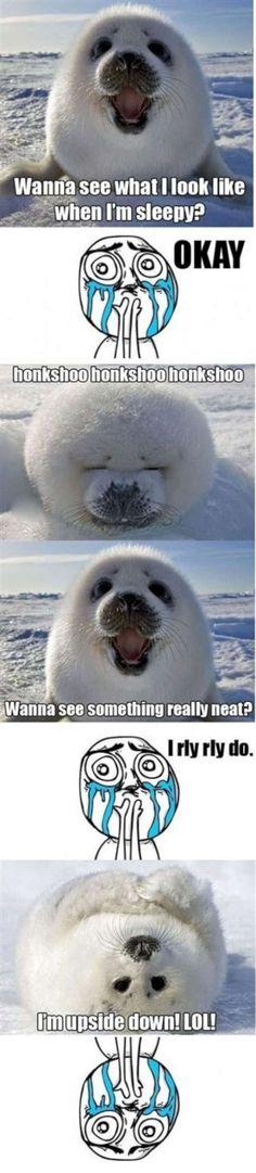 cute animal memes | cute seal meme-W630Vitamin-Ha | Vitamin-Ha