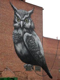 Owl graffiti street art.
