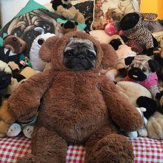 Puggy Bear