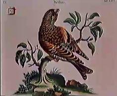 Historia Naturae, Suita (1967), Jan Svankmajer