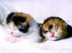 Výsledek obrázku pro gattini piccoli appena nati
