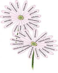 ortograficzne kwiatki - Szukaj w Google