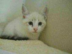 Cats & Kittens | HATTER  petprojectfoundation.org
