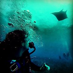 #PADI fan pic @mermaidjenna Manta rays