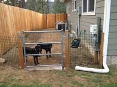dog run ideas on side of house - Google Search