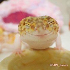 おはようございます✨ #leopardgecko #ヒョウモントカゲモドキ #レオパードゲッコー #爬虫類 #かわいい #いやし