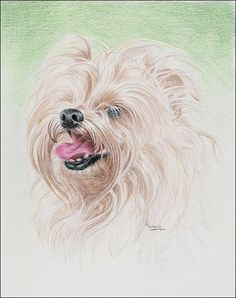Tutorial - Drawing a Long Haired Dog with Colored Pencils, Part 2 of 2 by Carrie Lewis
